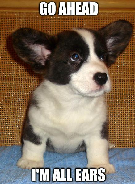 puppy listening
