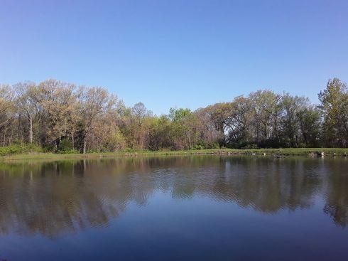 Pond 12